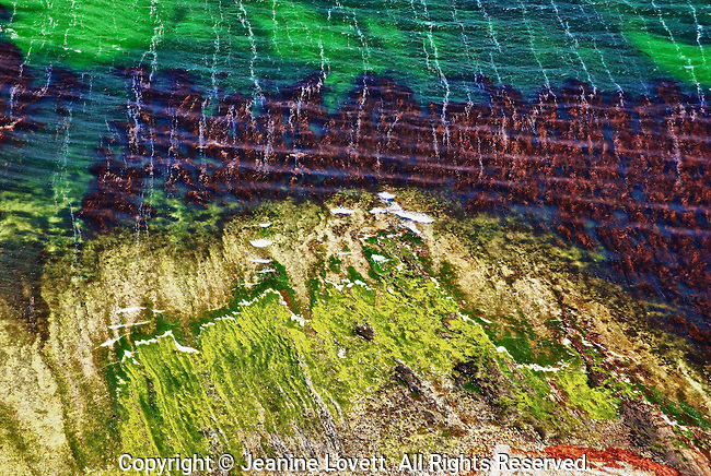 Aerial view creates an abstract pattern of sea, sand, with colorful lichens and seaweed flying over the Falkland Islands. could be used as a vertical photo.
