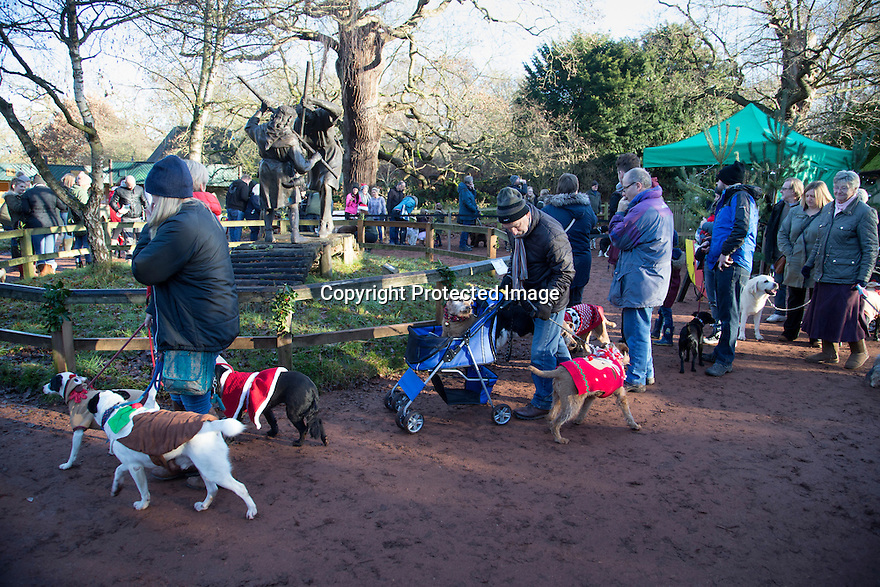 """18/12/16<br /> <br /> Close to 800 dogs, many of them dressed up in festive garb, have visited their very own Santa Paws in a special dog-only Christmas grotto held in Sherwood Forest in Nottinghamshire this weekend.<br /> The two-day event, which was organised by park rangers working for Nottinghamshire County Council, has been running for three years.<br /> Ranger Graeme Turner, who originally came up with the idea for a doggy-themed Santa's Grotto said this year has been the best so far.<br /> """"The queue is huge, it snakes back all the way round the visitor's centre,"""" he said. """"All the dogs are being very well behaved, I guess they don't want to get onto Santa Paw's naughty list this close to Christmas!""""<br /> All canine visitors to the grotto got a special doggy bag full of treats and money raised from the event will go to Jerry Green Dog Rescue charity.<br /> <br /> All Rights Reserved F Stop Press Ltd. (0)1773 550665   www.fstoppress.com"""