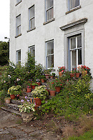 A short flight of stone steps outside the french windows to the dining room is lined with terracotta pots of plants