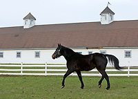 Town Pro, Hall of Fame Standardbred, at White Birch Farm 2012