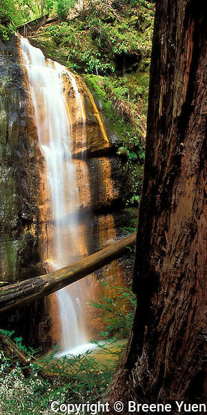Redwoods and Waterfalls make Big Basin State Park one of the crown jewels of California's Park System