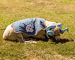 July 31, 2017. Chapel Hill, North Carolina.<br /> <br /> Rameses the Ram lays in the grass outside the 1930's era barn in which he lives. <br /> <br /> The Hogan family have long been the caretakers of Rameses the Ram. The current Rameses is the 21st in the line of the University of North Carolina's live mascot.