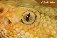 0511-1112  Neotropical Rattlesnake (South American Rattlesnake), Details of Head (eyes, nostrils), Crotalus durissimus  © David Kuhn/Dwight Kuhn Photography