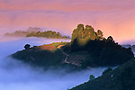 Fog and trees at sunrise in the Berkeley Hills, Alameda County, CALIFORNIA