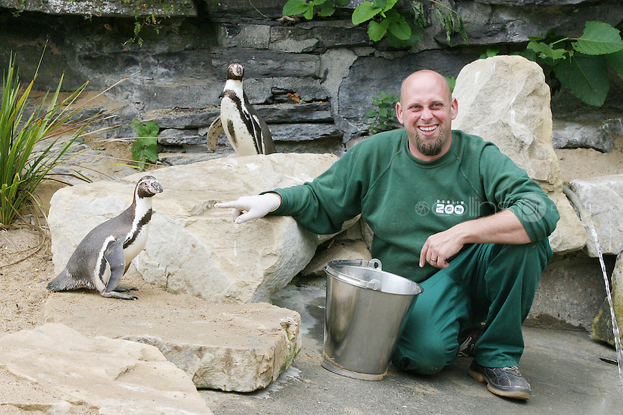 8/7/2010. Missing Penguin. Kelli the 10-year-old female penguin Kelli is pictured back at the Zoo with her mate and  keeper Garth Dejong.Three men are being sought after a penguin was stolen from Dublin Zoo this morning. The bizarre theft happened at around 8.30am before the zoo opened to the public. Three men climbed the perimeter fence and entered the penguin habitat, capturing a 10-year-old female named Kelli.  They put her into a sack and left the zoo where they hailed a taxi passing through the Phoenix Park. They told the driver they had a rabbit with them and he dropped them in Dublin's north inner city. Picture James Horan/Collins Photos