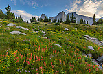 Wind River Range, WY: Field of alpine wildflowers looking up towards Warrior Peaks and War Bonnet Peak part of the Cirque of the Towers in the Popo Agie Wilderness; Shoshone National Forest