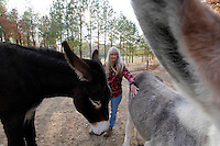 Deb Kidwell plays with AMJR 1942 Sassafras, left, and Lake Nowhere Eden, right, both American Mammoth Jackstock, on Saturday, Nov. 20, 2010 at Lake Nowhere Mule and Donkey Farm in Martin, Tenn. Kidwell breeds American Mammoth Jackstock, the only American breed of Ass, and one started by George Washington. With only an estimated 2,000 left in existence, the breed is dying off with the mechanization of farm equipment.