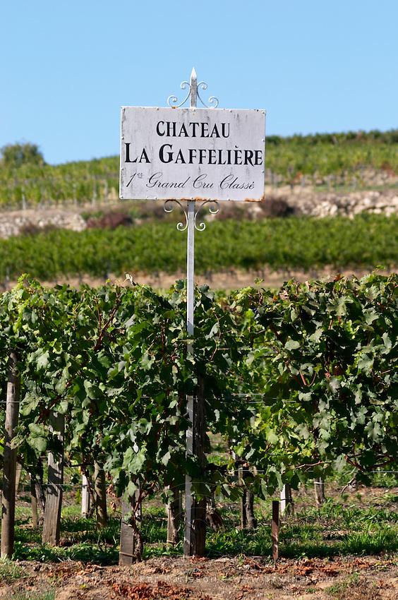 Vineyard. Chateau La Gaffeliere. Saint Emilion, Bordeaux, France