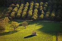 Europe/France/Aquitaine/24/Dordogne/Vallée de la Vézère/Périgord Noir/Thonac: Noyeraie dans la vallée de la Dordogne - Vue Aérienne