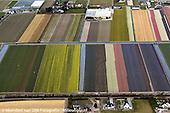 Luchtfoto bloembollenvelden in bloei