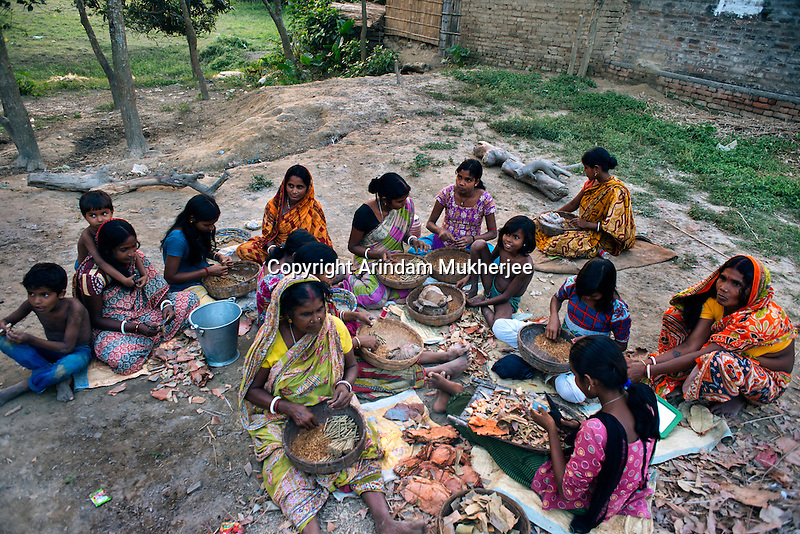 A group of women and children wrapping tobacco into Temburni leaves. 'Bidi', (thin hand rolled cigarettes) making is the primary occupation in every household in and around erosion affected areas of this region. For wrapping a 1,000 bidis a day, an individual gets 1.59 USDKulidihar village, Murshidabad District, West Bengal, India.