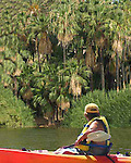 Man sails in kayak past palm trees