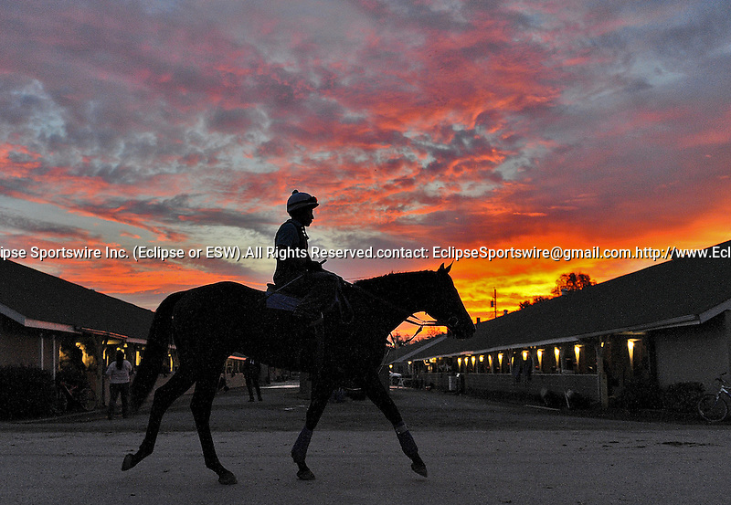 Scenes from the backside of Churchill Downs during Breeders' Cup week preparations November 3, 2011.