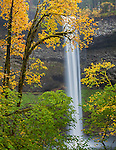Silver Falls State Park, OR: South Falls plunges 177 ft over basalt cliff into Silver Creek Canyon framed with Big Leaf Maples in fall color