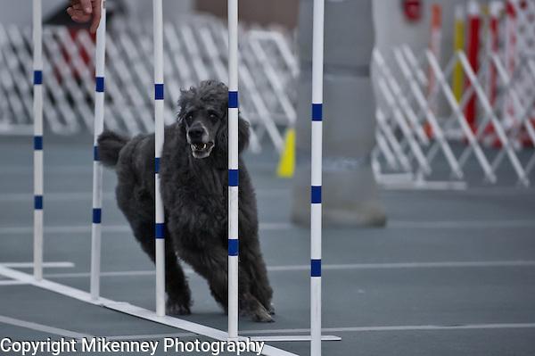 Central New York SHetland Sheepdog Club Winter Agility Trial January 16 - 17 2015