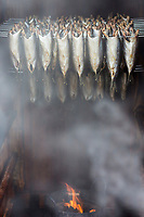 France, Pas-de-Calais (62), Côte d'Opale, Wissant: Fumage des harengs lors de la fête des flobarts , bateaux de pêche traditionnels  // France, Pas de Calais, Opal Coast, Wissant:  Smoked herring during the festival flobarts, traditional fishing boats