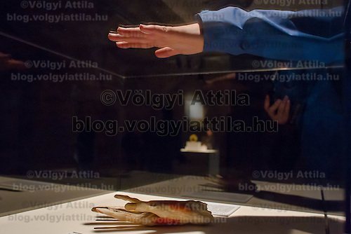 Visitor watches a preserved human body on display at an exhibition in Budapest, Hungary on April 02, 2012. ATTILA VOLGYI