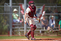 Saint Joseph's Hawks catcher James McConnon (14) during a game against the Ball State Cardinals on March 9, 2019 at North Charlotte Regional Park in Port Charlotte, Florida.  Ball State defeated Saint Joseph's 7-5.  (Mike Janes/Four Seam Images)