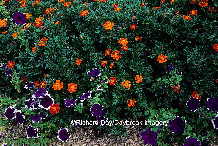 63821-03310 Hero Red Marigolds & Petunia Blue Frost    IL