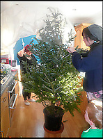 BNPS.co.uk (01202) 558833<br /> Picture: KimEvans/BNPS<br /> <br /> The Evans household Christmas tree ariving this year from Trees For Rent in Charminster, Dorset. <br /> <br /> En-tree-preneur Peter Inch has found an innovative way to stop Christmas trees being discarded after the festive season - by renting and replanting them.<br /> <br /> The businessman has grown around 3,000 pine trees on his farm that he charges people to use in their homes during the holiday period.<br /> <br /> Peter delivers the trees to customers' doors at the end of November and then collects them in the first week of January.<br /> <br /> Once he has picked up the trees they are placed back in the ground in tubs and linked up to a watering system that revives them after being inside for so long.