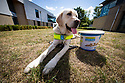08/08/18<br /> <br /> Guide Dogs breeding centre, leamington Spa.<br />  <br /> All Rights Reserved: F Stop Press Ltd. +44(0)1335 344240  www.fstoppress.com www.rkpphotography.co.uk
