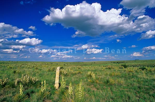 Santa Fe Trail marker in the Kiowa National Grassland, near Clayton, New Mexico, AGPix_0268.