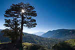 Sun behind pine trees in morning over mountains in Desolation Wilderness, El Dorado National Forest, California