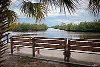 Collier-Seminole State Park, Naples, Florida, Feb. 12, 2011. Photo by Debi PIttman Wilkey