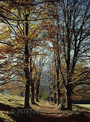 Gerhard, LANDSCAPES, photos, D.Herbstliche Buchenallee im Gegenl, trees, autumn(DTMB2222-17A,#L#)