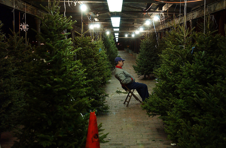 trees1/121901 - Jimmy German of Captiol Hill sells Christmas tress at Eastern Market.