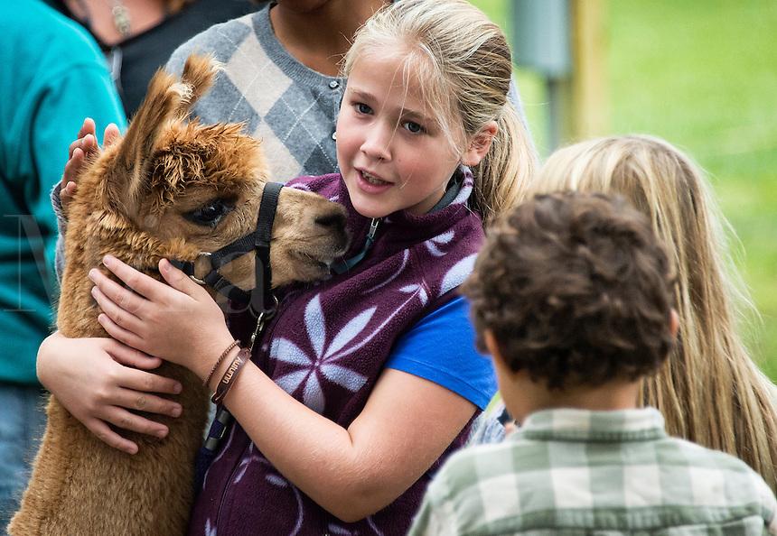 Girl petting an Alpaca at the Martha's Vineyard Harvest Fest, West Tisbury, Massachusetts, USA