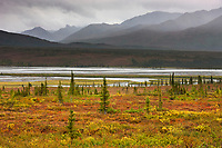 Blueberry plants on the tundra turn orange, Susitna River and Alaska Range mountains along the Denali highway, Interior, Alaska.