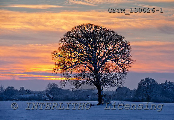 Tom Mackie, CHRISTMAS LANDSCAPE, photos,+Winter Sunset over Lone Tree, Norfolk, England,Britain, British, EU, East Anglia, England, Europa, Europe, Norfolk, UK, back-+lit, backlight, backlit, contre-jour, field, fields, horizontal, horizontals, light, lone tree, snow, sunset, time of day, tr+Winter Sunset over Lone Tree, Norfolk, England,Britain, British, EU, East Anglia, England, Europa, Europe, Norfolk, UK, back-+lit, backlight, backlit, contre-jour, field, fields, horizontal, horizontals, light, lone tree, snow, sunset, time of day, tr+,GBTM130026-1,#xl# Landschaften, Weihnachten, paisajes, Navidad