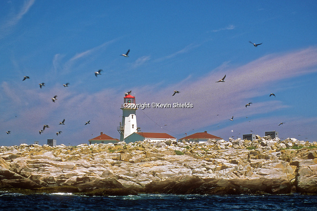 View of Machial Seal Island near the coast of Maine, USA