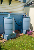 Rain barrels, irrigation system for watering, blue rainbarrels for rain water collection, two, more than one, gutter, backyard