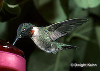 HU11-030x  Ruby-throated Hummingbird - male hovering while drinking sugar water at feeder -  Archilochus colubris