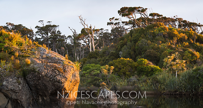 Sunset over coastal native forest at Ship Creek, South Westland, UNESCO World Heritage Area, New Zealand, NZ