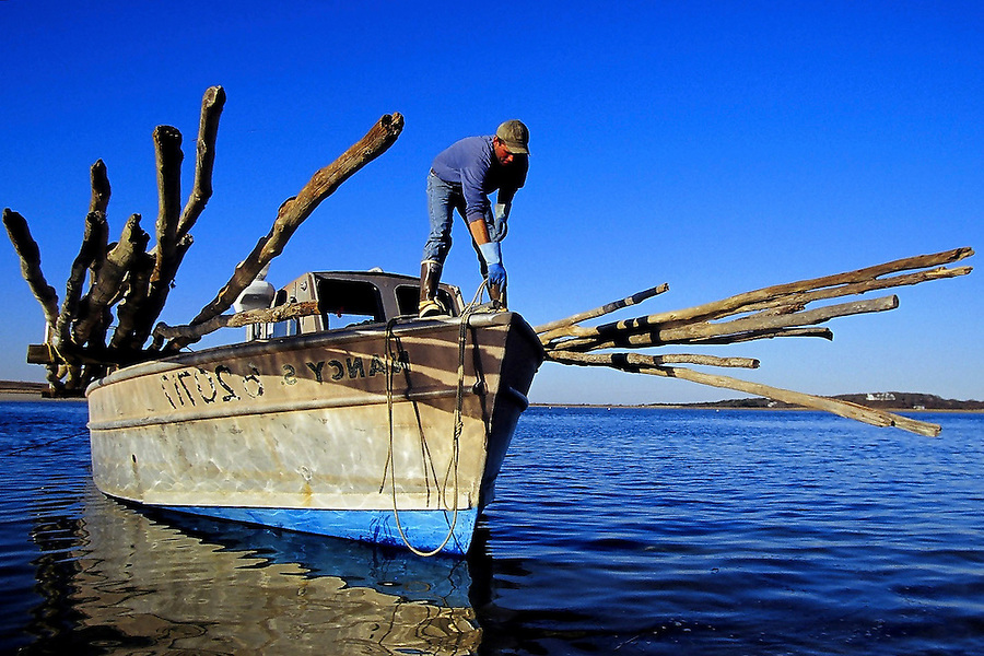 Kurt Martin releases the rope on his boat after loading weir poles at Hardings Beach in Chatham, MA, to transport to the weir trap sites.