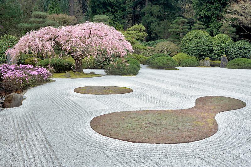Flowering cherry tree and purple azaleas. Japanese Gardens. Portland. Oregon