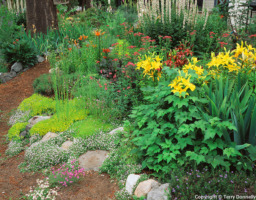 Vashon Island, WA<br /> Northwest summer garden with a boardering path and flowering ground covers, lilies and penstemon