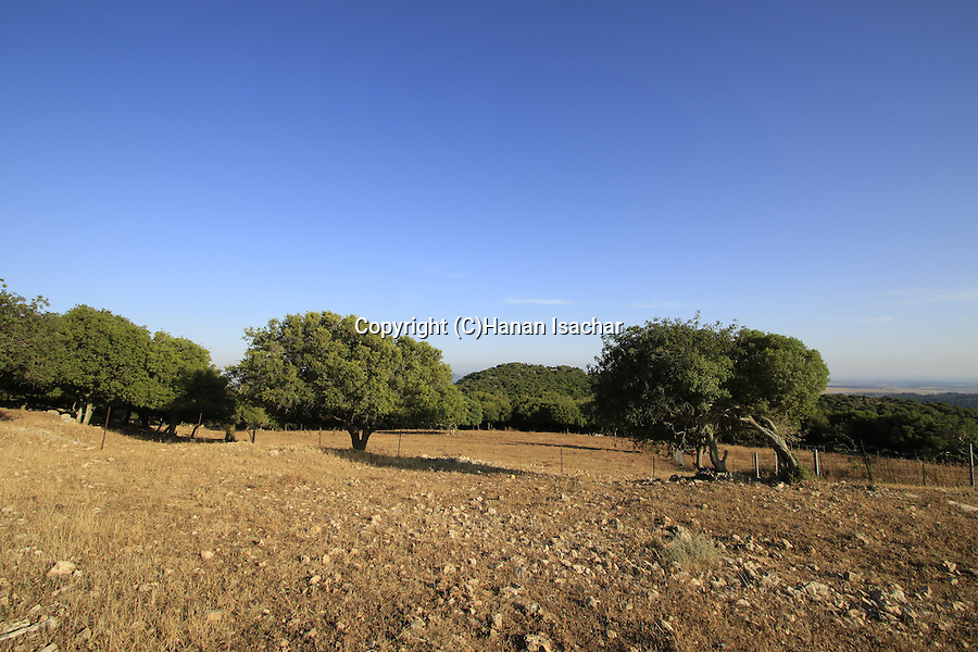 Israel, Hurvat Dubah on Mount Carmel, location of prophet Elijah's contest with the prophets of Baal