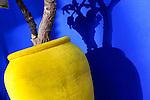 Yellow pot against blue wall in the Majorelle Garden, Marrakech.