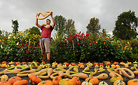 Colourful autumn Harvest at Forde Abbey.<br /> <br /> Kitchen Gardener, Olly Hone admires one of newly picked summer squashes in the Monastery garden.<br /> <br /> Colourful pumpkins, squashes and gourds at the Forde Abbey Monastery on the Dorset/Somerest boarder.<br /> <br /> Forde Abbey is a former Cistercian monastery dating back to the early 12th century