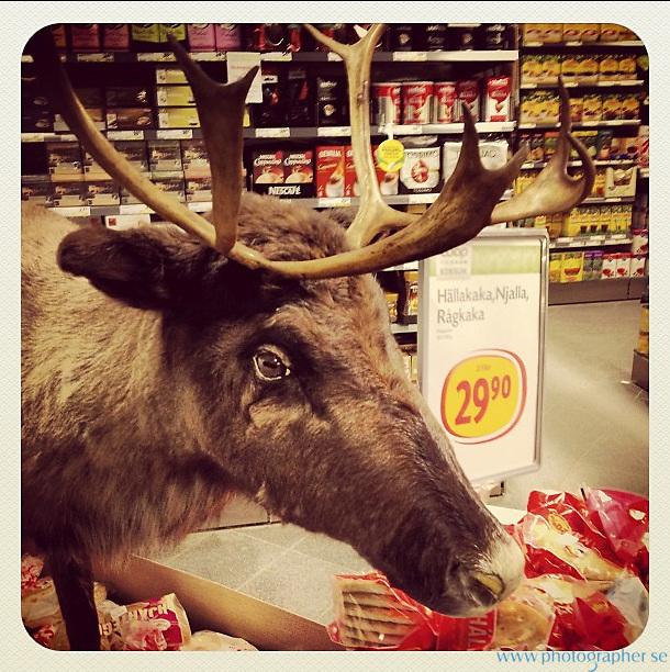 Reindeer in the shop