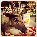 Reindeer in the shop