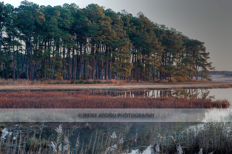 Chincoteague National Wildlife Refuge on Assateague Island, Virginia at sunrise.