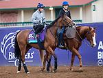 DEL MAR, CA - NOVEMBER 02: Rajasinghe, owned by Rebel Racing and trained by Richard Spencer, exercises in preparation for Breeders' Cup Juvenile Turf at Del Mar Thoroughbred Club on November 2, 2017 in Del Mar, California. (Photo by Kazushi Ishida/Eclipse Sportswire/Breeders Cup)
