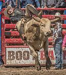 Oakdale Rodeo 2017