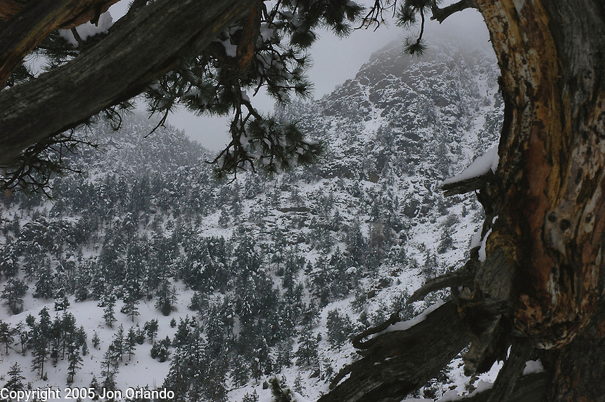 Winter in Dead Man Canyon, outside of Lyons, Colorado.
