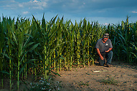 Ohio farmer Kevin Scott examines soil at the edge of a corn field in afternoon sun.